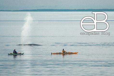 ¿O acercarse a las ballenas al amanecer...?