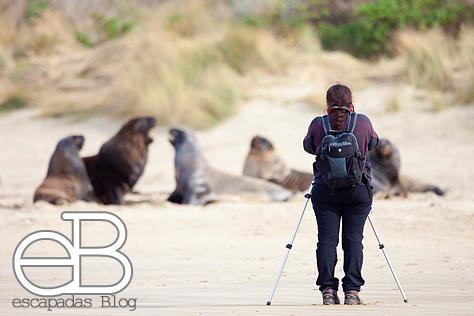 Y Joana fotografiando leones marinos. Esta vez la mochila era la peque, pero no siempre es así...